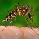 Gastos com dengue disparam em planos de saúde no primeiro trimestre